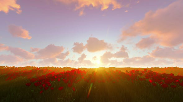 Thumbnail for Sunset Over Tulip Field
