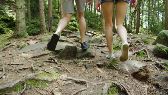 Cover Image for Rear View: A Couple of Tourists Are Walking Along a Mountain Path Covered with the Roots of Large