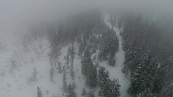 Thumbnail for Drone Flies into the Snow-covered Coniferous Forest during the Fog