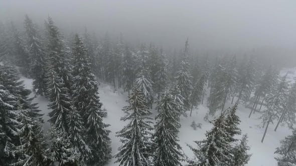 Thumbnail for Drone Flies over the Coniferous Forest during a Blizzard