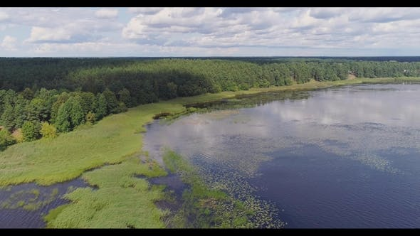 Thumbnail for Lake Water Lilies Seaweed Drone Flight and Pine Forest