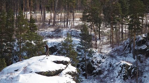 Boxer Trains Atop a Mountain in the Forest in Winter