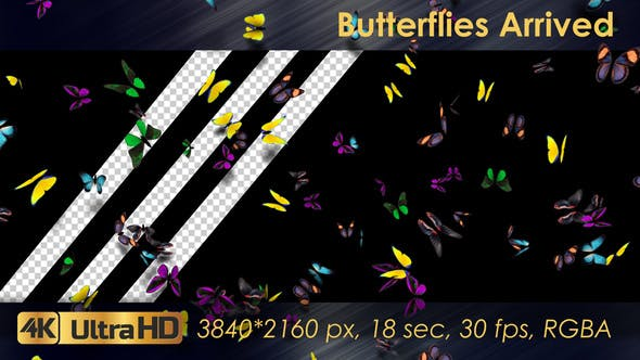 Thumbnail for Butterflies Arrived