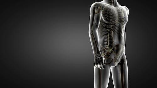 Human Bones Röntgenuntersuchung