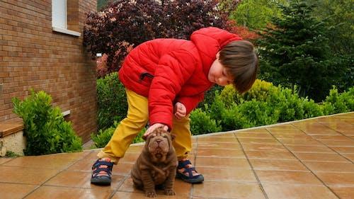 Child Caress his Shar Pei Puppy
