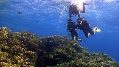 Master Diver Teaches Students To Dive