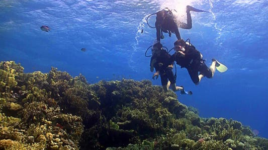 Thumbnail for Master Diver Teaches Students To Dive