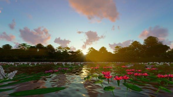 Thumbnail for Beautiful Lotus Lake
