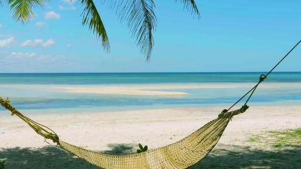 Thumbnail for Empty Hammock Swings Between Two Palm Trees on Azure Ocean Background