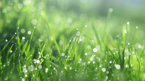 Cover Image for Drops of Water on the Grass. Morning Dew. Blurred Background