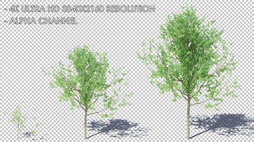 Growing Tree HQ