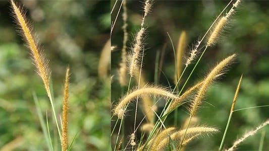 Thumbnail for Golden Lalang Grass Flower (Pack Of 2)