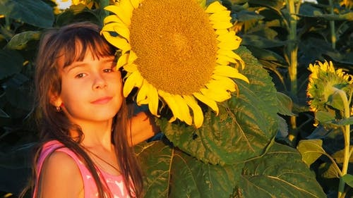Face of a Child with a Large Sunflower