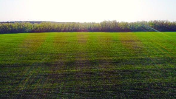 Thumbnail for Flug über ein Feld mit grünem Gras
