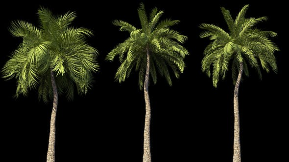 4K Beach Palms Growing Timelapse