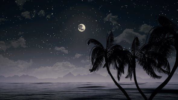 Thumbnail for Palms In Ocean At Night