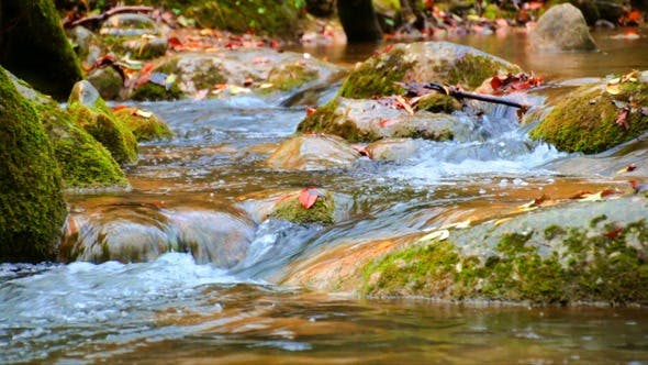 Thumbnail for Creek Cascade with Fallen Red Leaves in Fall