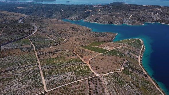 Thumbnail for Aerial View of Primosten Vineyards, Croatia
