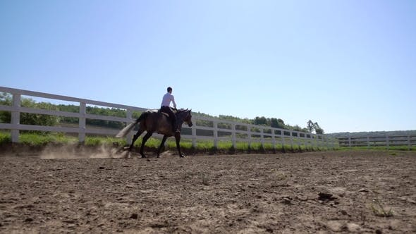 Thumbnail for Young Man Ride Horse Farm Animal with Blue Sky in Background