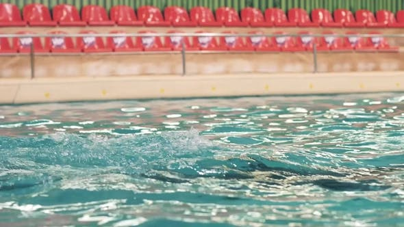 Dolphin Swimming Underwater Pool and Playing with Ring in Dolphinarium