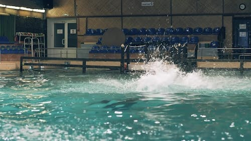 Dolphin Jumping with Ball During Training in Swimming Pool in Dolphinarium