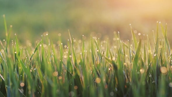 Thumbnail for Grass Background with Water Drops