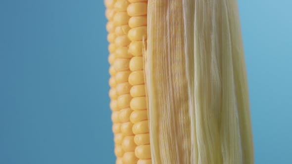 Thumbnail for Corn Cob on Blue Background