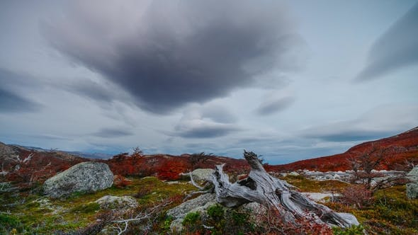 Thumbnail for View on Mountains and the Forest in the National Park Los Glaciares National Park. Autumn