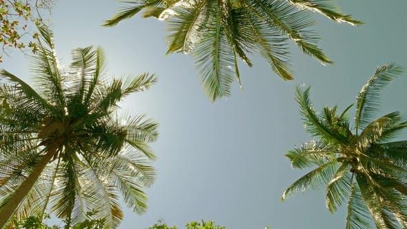 Thumbnail for Sun Shining Through Coconut Palm Leaves