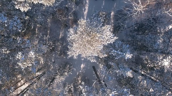 Thumbnail for Aerial View Winter Snowscape with Forest, Trees and Snowy Cliffs. Blue Sky. Winter Landscape.
