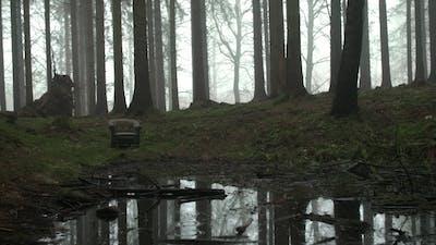 Creepy Armchair in Woods