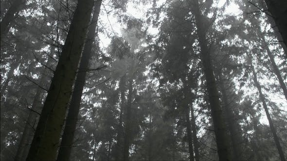 Thumbnail for Move Through Woods