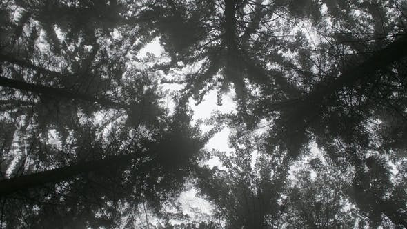 Spinning Forest
