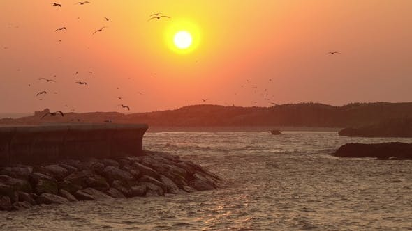 Thumbnail for Sunset Sky with Flying Seagulls in Essaouira