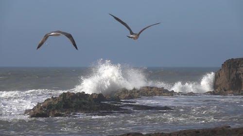 Splashes Big Waves and Flying Seagulls, Slomo