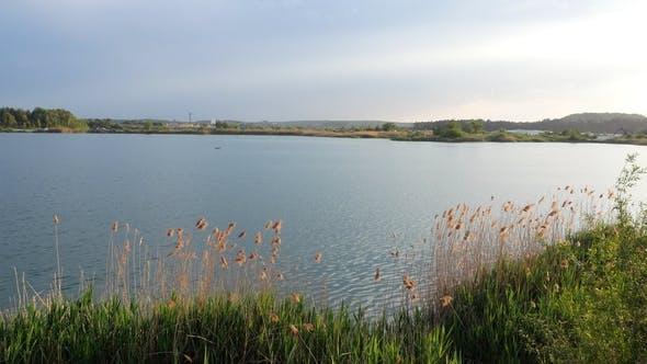 Thumbnail for Lake Bulrush Reed Nature