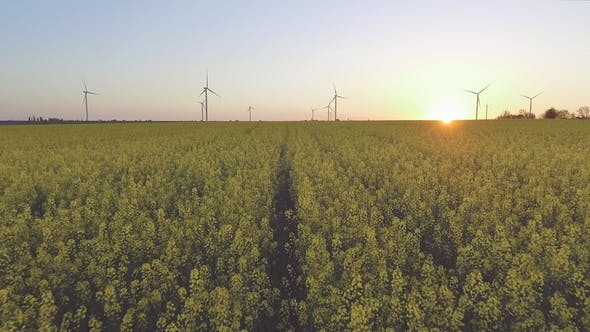 Thumbnail for Aerial View of Wind-Powered Electrical Generators at Rapeseed Field