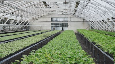 Greenhouse with Flowerpots.