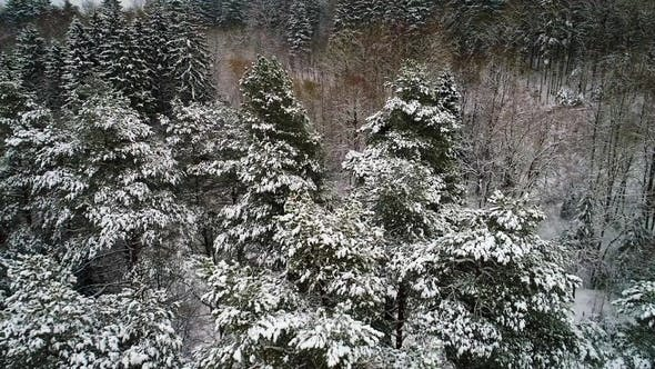 Thumbnail for Aerial View of Winter Snowy Forest