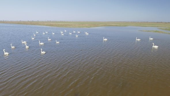 Thumbnail for Aerial Flying near Swan Bevy