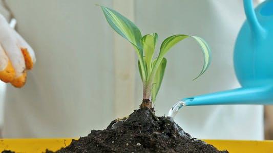 Thumbnail for Seedling
