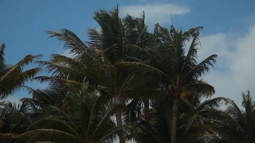 Palm trees Full HD