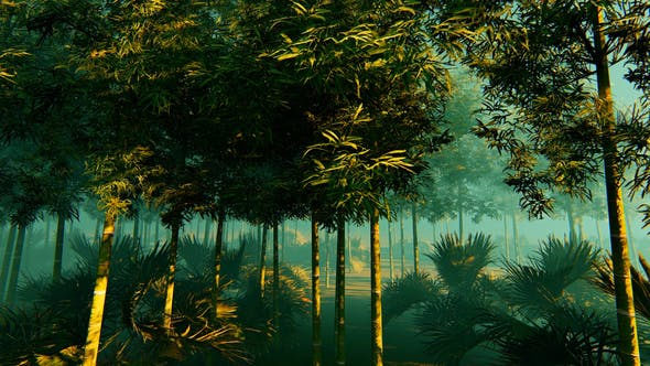 Thumbnail for Bamboo Forest In The Fog