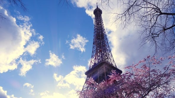 Thumbnail for Eiffel Tower with the Sakura Tree Branches