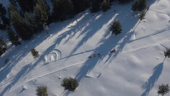 Thumbnail for Aerial view of a dog sled riding along fir trees