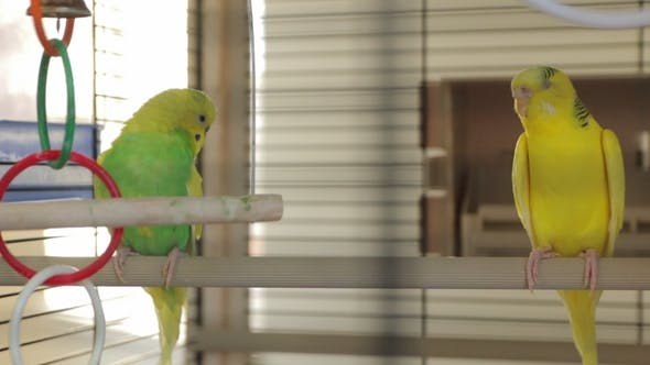 Thumbnail for The Yellow Green Parrots