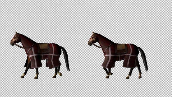 Thumbnail for Medieval War Horse Walk