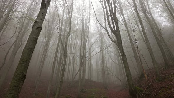 Thumbnail for Landscape in Spring Forest Misty Morning