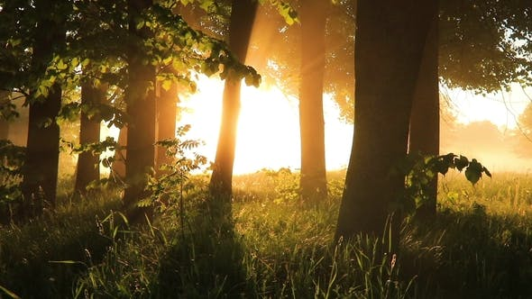 Thumbnail for Beautiful Misty Sunrise in the Summer Forest