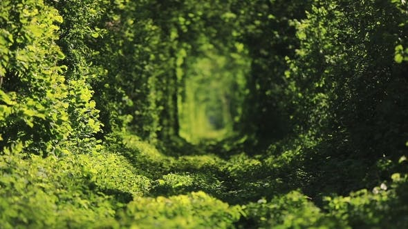Thumbnail for Beautiful Tunnel of Green Trees